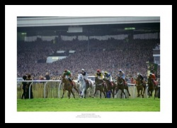 Desert Orchid Photo - Last Race in 1991 Print Memorabilia