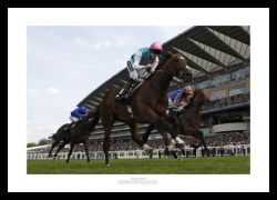 Frankel Photo - 2011 Ascot Horse Racing Print Memorabilia