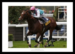 Frankel Print - 2012 Champions Stakes Ascot Photo