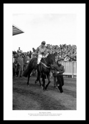 Sea Pigeon Photo - 1981 Cheltenham Champion Hurdle Print Memorabilia