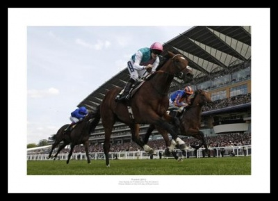 Frankel 2011 St James's Palace Stakes Ascot Photo Memorabilia