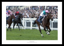 Frankel 2011 Queen Elizabeth II Stakes Photo Memorabilia